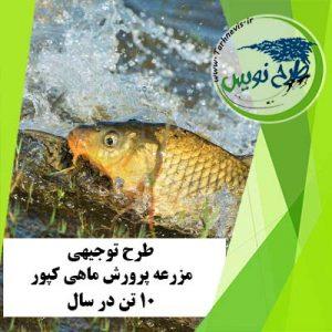 طرح توجیهی پرورش ماهی کپور 10 تن در سال